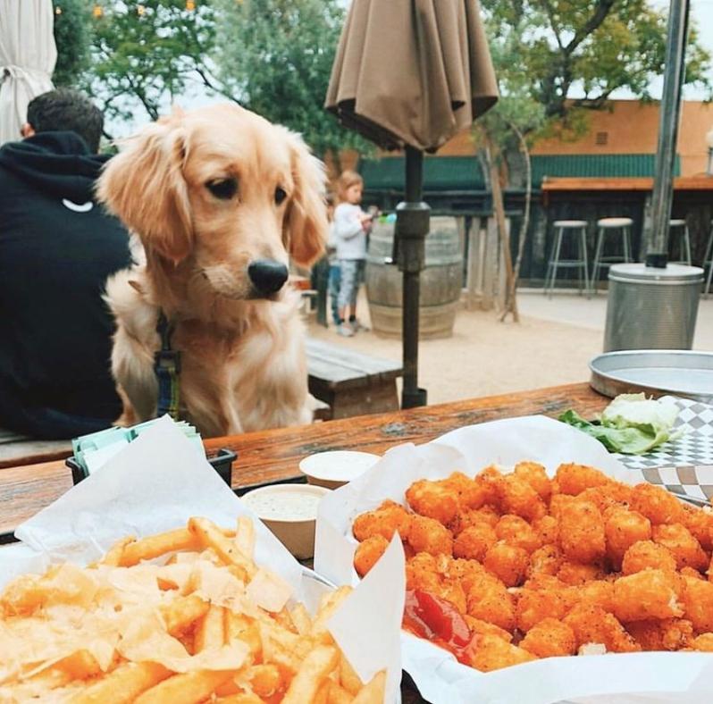 Best Dog Friendly Restaurants San Diego